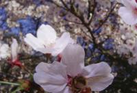 夏季最新最全蜜蜂养殖技术