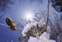蜂产品在日本保健品中的销售排行