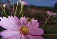 蜂蜜的搭配方法,哪种蜂蜜好一些