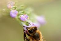 小蜜蜂也能挣到上千万