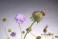蜂蜜能不能和豆制品一起吃?