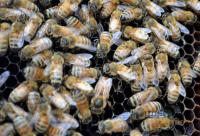 蜂箱的种类和基本构造(二)