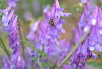 自贡上万只蜜蜂逃出蜂箱外出纳凉 乱舞大街上