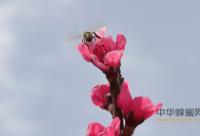 世纪之交,我国蜂产品发展的路在何方