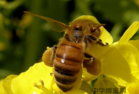 蜂蜜怎么吃才能保住它的营养?