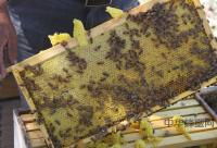 7天简约派蜂蜜减肥食谱