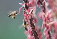 你真的懂蜂蜜吗