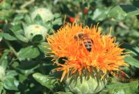 蜜蜂安全度夏三措施要点