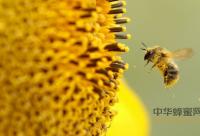蜂蜜,美容护肤的最好食材