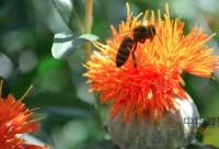 蜂群秋冬季管理,蜂群秋冬季管理知识