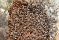 软质塑料泡沫在帮助蜜蜂群越冬中的作用