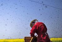 义乌72岁蜂农攻克蜜蜂艾兹病 研究成果通过评审