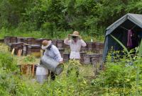 蜂花粉的主要成分有哪些?含量多少?