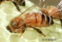 塑料泡沫帮助蜂群越冬