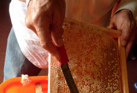 蜂胶都不溶于水吗