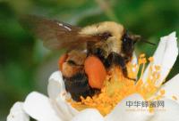 2010年全国蜂产品信息交流会将在武汉举行