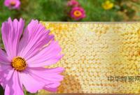 被牛奶稀释的蜂蜜可治疗儿童贫血症