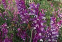 如何防止蜜蜂越冬死亡