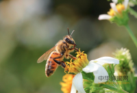 八款蜂蜜减肥食谱 一周轻松狂瘦15斤