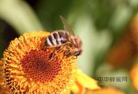 如何食用蜂蜜才健康?
