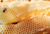 蜂群夏管注意五点