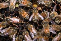 男性不宜多喝蜂蜜吗?