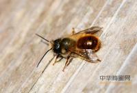 不同品种的蜂蜜功效不同 挑选蜂蜜应该因体质而异