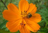 蜂蜜怎么辨别真假?你可以这样做