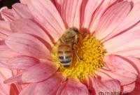 浅谈设施农业蜜蜂授粉管理技术