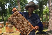 饥荒蜂箱怎么取蜂蜜