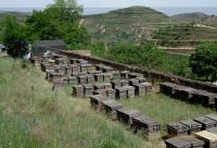 海口养蜂产业年产值8000万元|养蜂|蜜蜂