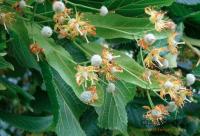 """石城小蜜蜂酿出""""甜蜜产业"""" 促进生态平衡农民增收"""