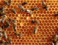 蜂胶用途(全)