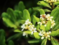 冬季蜂群管理要点