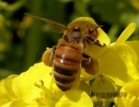 如何保存蜂蜡,蜂蜡的保质期有多久