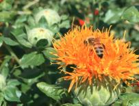 帮蜜蜂搬家