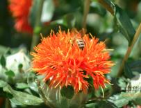 中华蜜蜂十框蜂箱,中华蜜蜂十框标准蜂箱