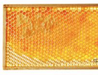 蜂胶治疗胃炎的作用 蜂胶治疗胃炎吗