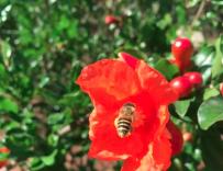 分蜂群几天会开繁