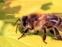 蜂毒肽防辐霜,蜂毒肽防辐霜作用与功效