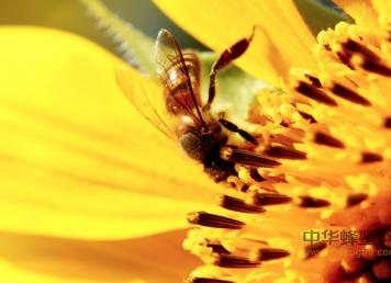 蜂王浆,蜂花粉,蜂胶,蜂蜜的区别
