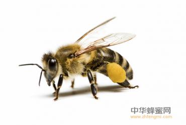 湖南省浏阳市蕉溪镇养蜂合作社助力精准扶贫