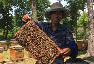 蜜蜂蛹病治疗,蜜蜂蛹病防治方法