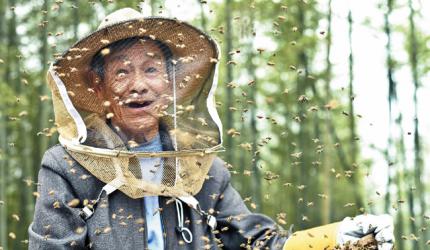 秋季养蜂技术要点,蜂群的秋季管理技术 育王培育越冬蜂